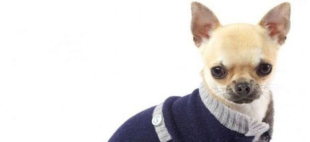vendita usa online stile di moda del 2019 cerca autentico Moda per animali: i brand che hanno creato accessori per ...