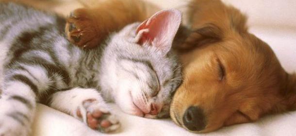 Gatti domestici stressati? La colpa è dei padroni che li trattano come cani