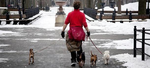 Professione dogsitter: cosa fa e come diventarlo