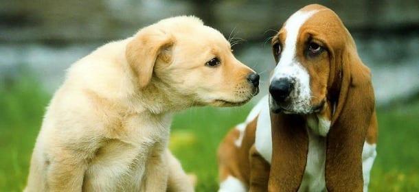 Esposizione Internazionale Canina: a Padova un weekend bestiale!