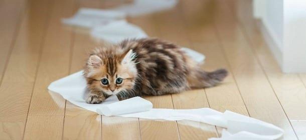 In inverno le fusa del gatto fanno stare meglio. Uno studio lo dimostra
