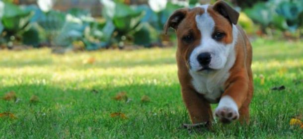 I cani e le piante: quali è meglio non avere sia fuori che ...