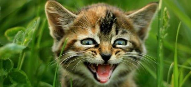 Gatti ecco alcune delle piante killer da non tenere mai for Piante velenose per i gatti