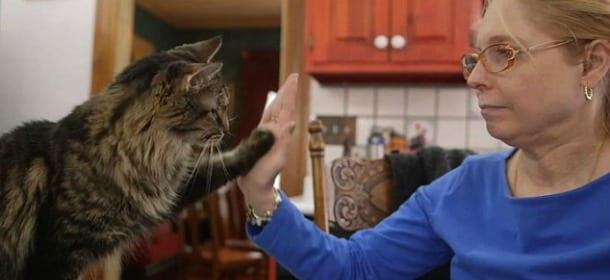 I gatti capiscono il linguaggio dei segni. Parola di Kim Silva [VIDEO]