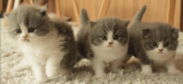 Chi ama i gatti è intelligente, amorevole e anche attraente