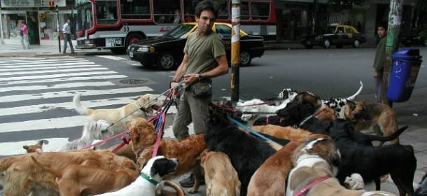 Lavorare con i cani facendo il dog walker si guadagnano for Lavorare con i cani