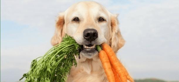 Cani Gatti E Alimentazione Boom Di Cibo Vegetariano Ma Cè Chi