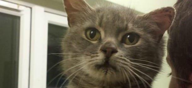 Gatto abbandonato perch ha 3 orecchie ora in cerca di for In cerca di una nuova casa