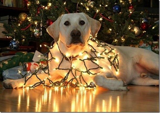 Immagini Natalizie Con Cani.Cani Gatti E Albero Di Natale Consigli Per Evitare
