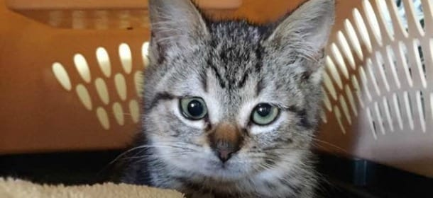 Gatti strabici, belli e felici Spangles, Jarvis e Ozzy star del web [FOTO]  , Velvet Pets , VelvetPets