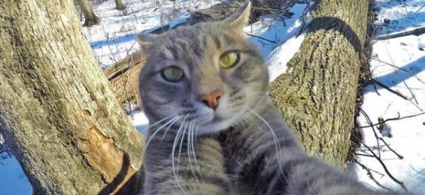 Manny Il Gatto Boss Dei Cani Famoso Per I Suoi Selfie Ma è