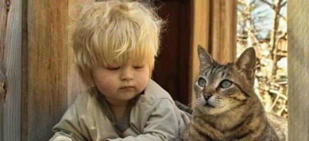 Gatti E Bambini 5 Falsi Miti Che Vanno Sfatati Velvet Pets