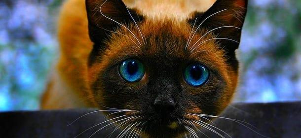 Gatti E Linguaggio 6 Suoni Felini E Il Loro Significato Velvet