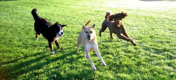 Il cane scappa ogni volta che ne ha la possibilità? Come evitarlo