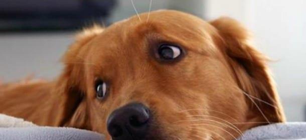 Cani: perché dar loro il cibo dal tavolo fa male (a Fido e a voi)