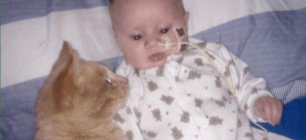 Il gatto Siggy che ha aiutato il piccolo Isaac a guarire dalla sua malattia