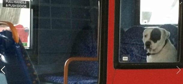 Abbandonano il cane in autobus: la foto dei suoi occhi tristi fa il giro del mondo