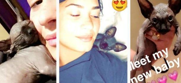 Demi Lovato adotta un gatto senza pelo: così combatte la sua allergia