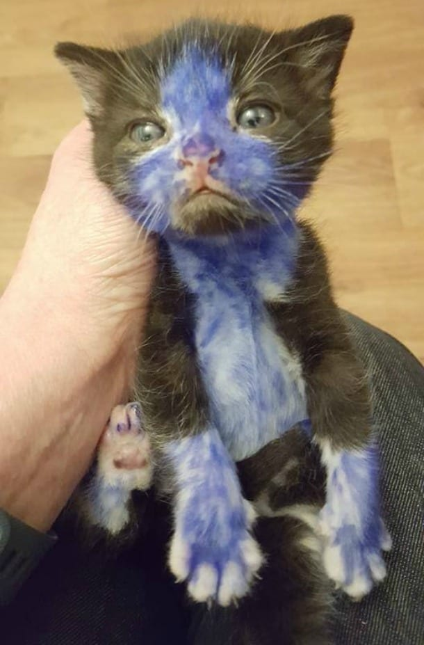 Gattini Colorati Di Azzurro E Di Verde Lo Quot Scherzo Quot Che