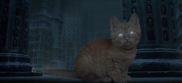 """Gattini e Game of Thrones: la serie cult """"rivisitata"""" dai felini [VIDEO]"""