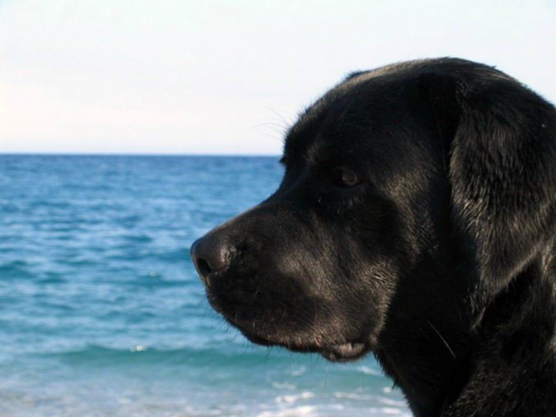 Si rifiuta di fare il bagno perch c 39 un cane quello che accade dopo incredibile velvet - Bagno cane dopo antipulci ...
