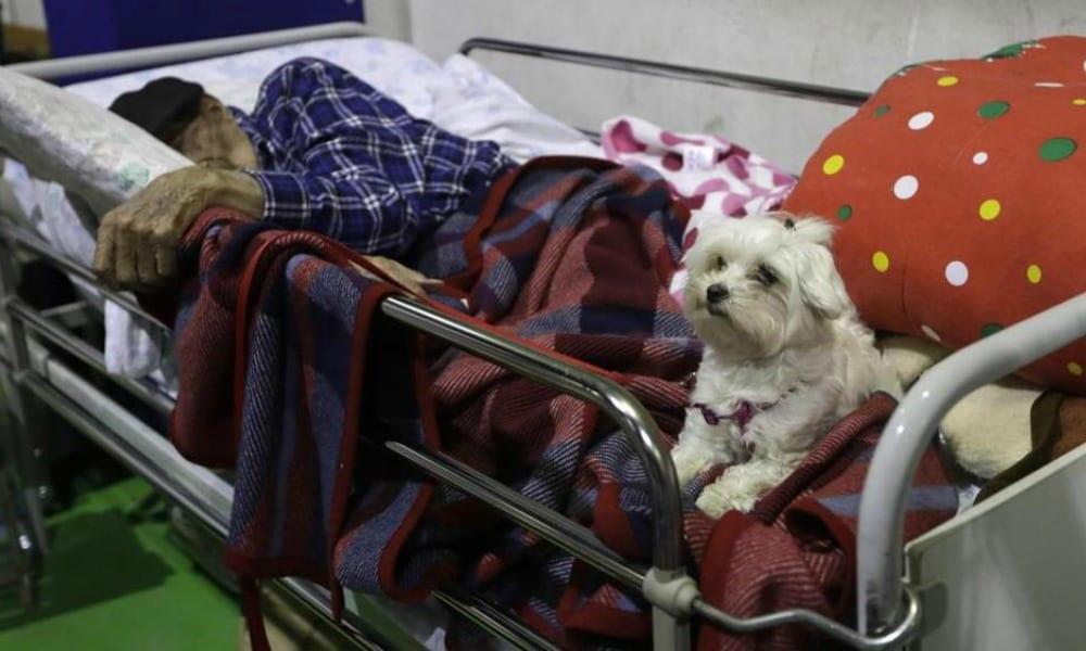 Terremoto, anziano in ospedale col cane. Ha perso tutto, ma non lui