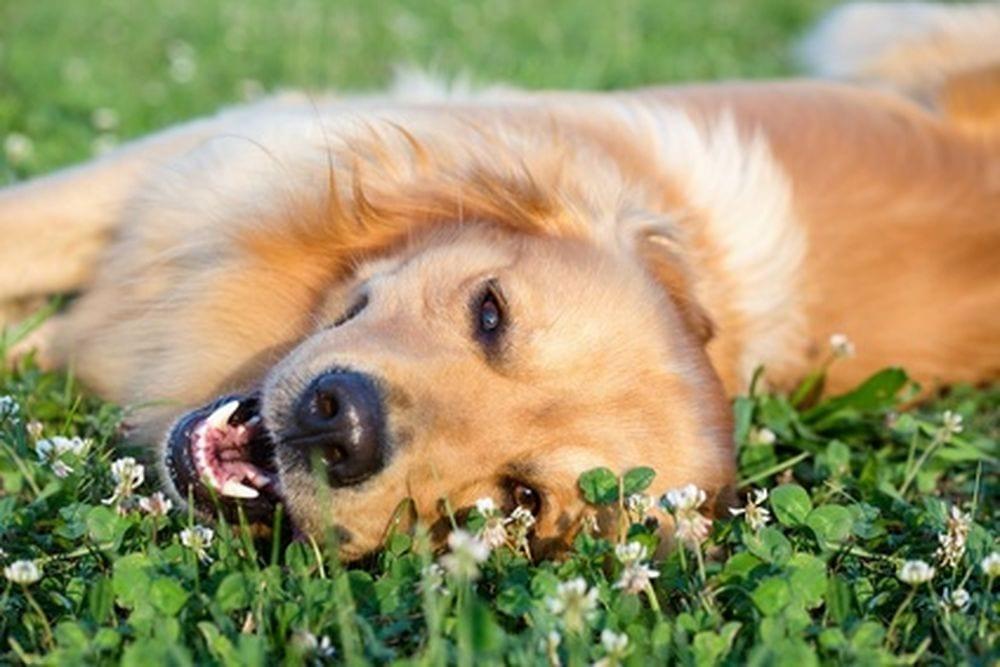 L esperto risponde le piante e le erbe velenose per i for Piante velenose per i cani