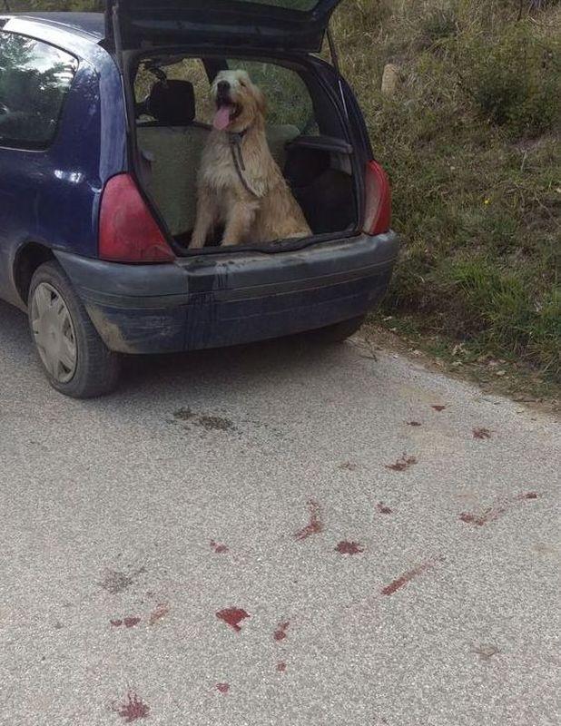 """Amatrice: lega il cane a una corda e lo trascina dietro l'auto: """"Voleva giocare con gli altri cani e non mi obbediva"""""""