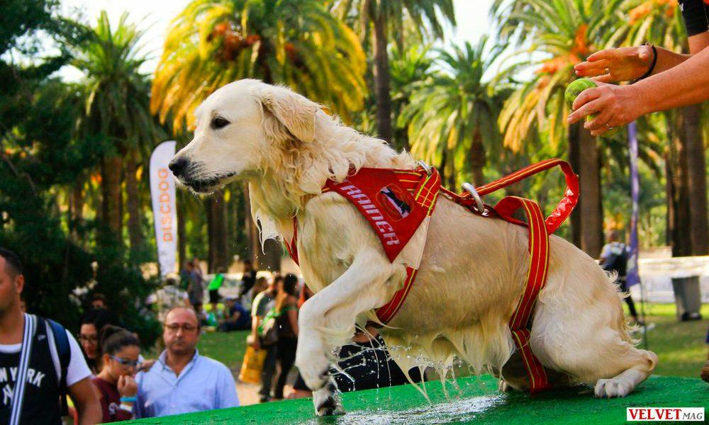 """Scuola Italiana Cani Salvataggio: """"Il binomio cane-conduttore è indissolubile"""" [ESCLUSIVA]"""