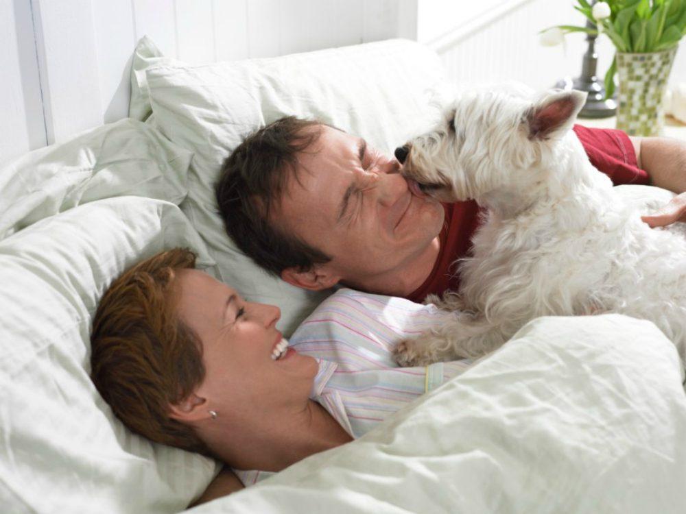 Cani e gatti un efficace terapia di coppia velvet pets velvetpets - Perche i gatti fanno la pipi sul letto ...