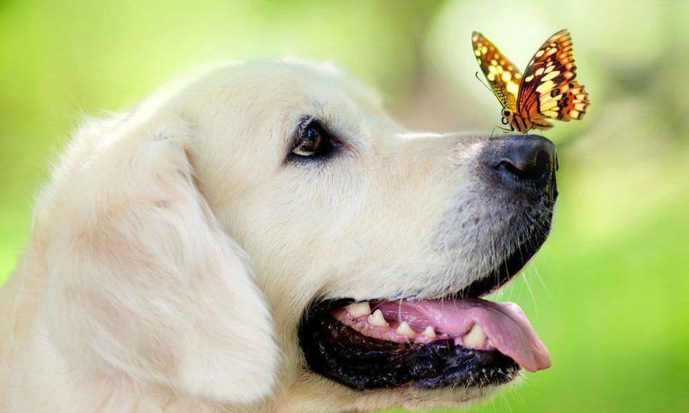 Giornata Mondiale degli Animali: il 4 ottobre è la loro ...