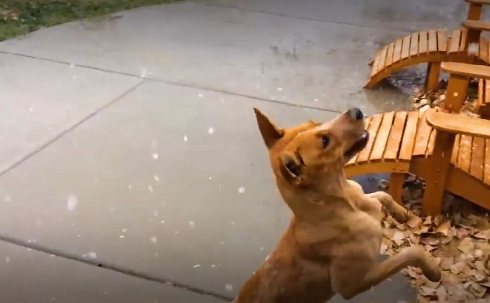 Il cane mangia neve video velvet pets velvetpets - Cane che mangia a tavola ...