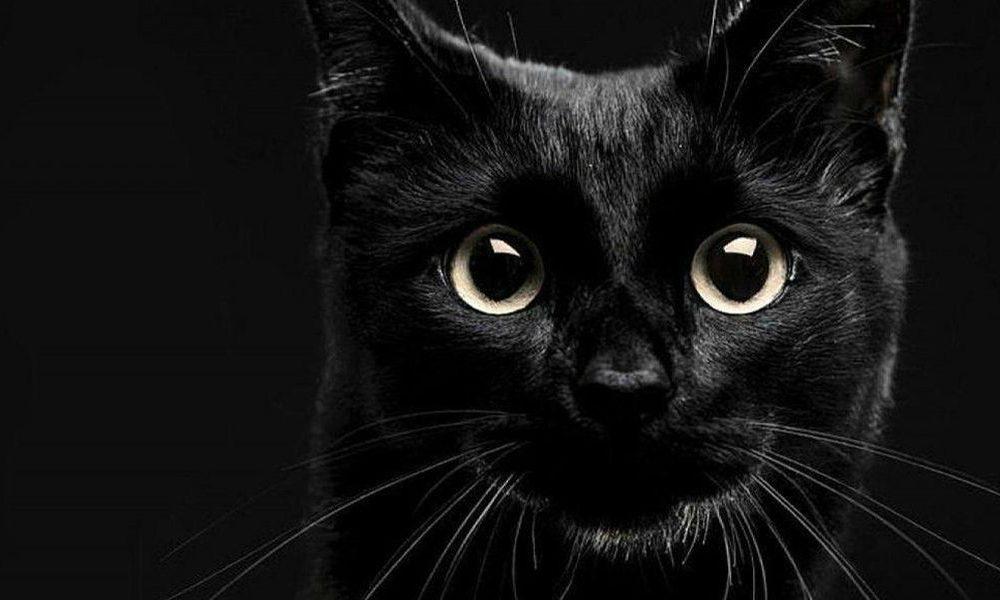 Www. dolce nero micio