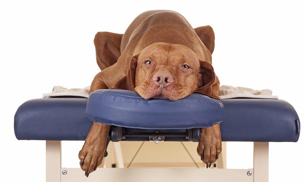 Dog massage: tecniche di massaggio per cani