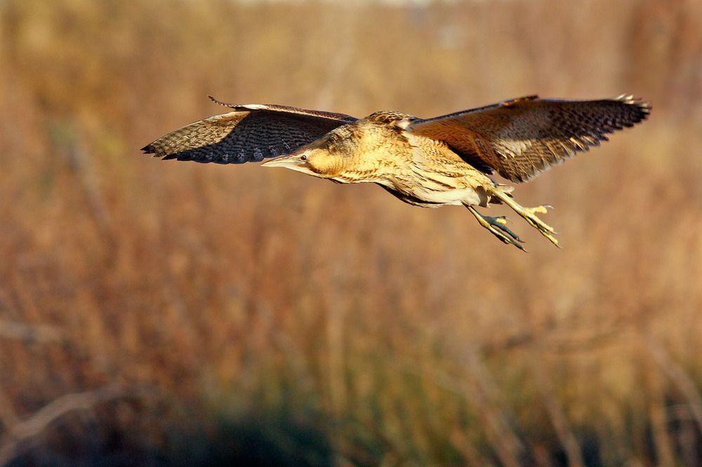 """Albano Carrisi: """"gli uccelli hanno il diritto di volare e non di essere abbattuti"""""""