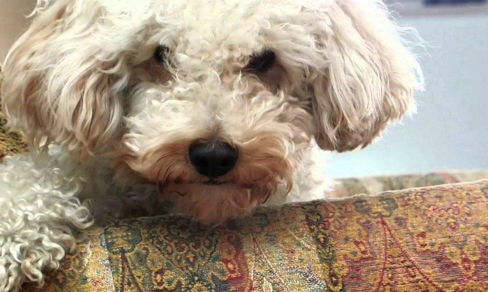 Perde la sua cagnolina e, dopo disperate ricerche, la ritrova in un cassonetto