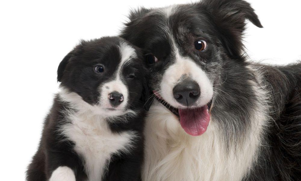 Quanto è intelligente il vostro cane? Una test aiuta a scoprirlo