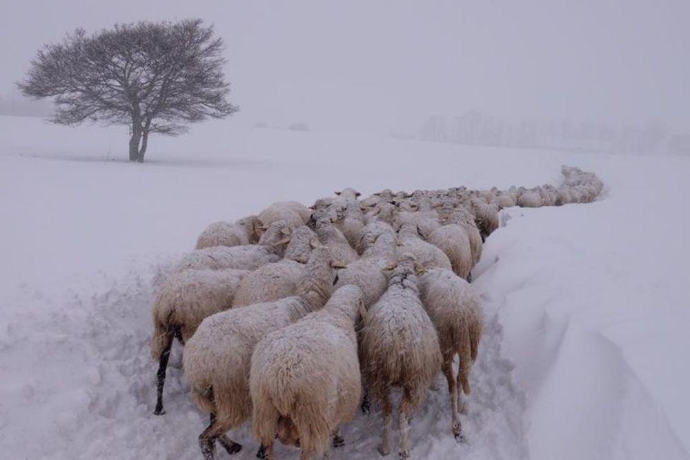 Sepolti da neve, primi animali morti