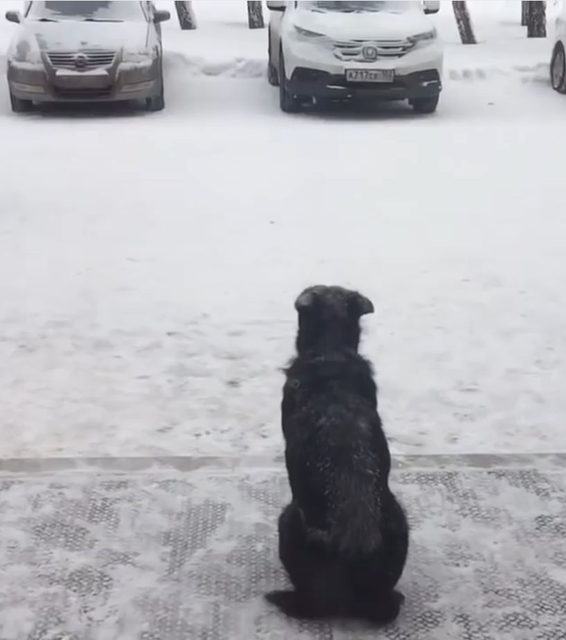 Cane attende per tre anni al gelo [VIDEO]
