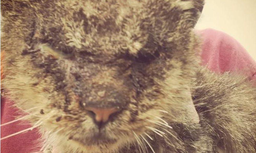 Il gatto è brutto e nessuno lo vuole, ma un gesto d'amore lo trasforma [FOTO]