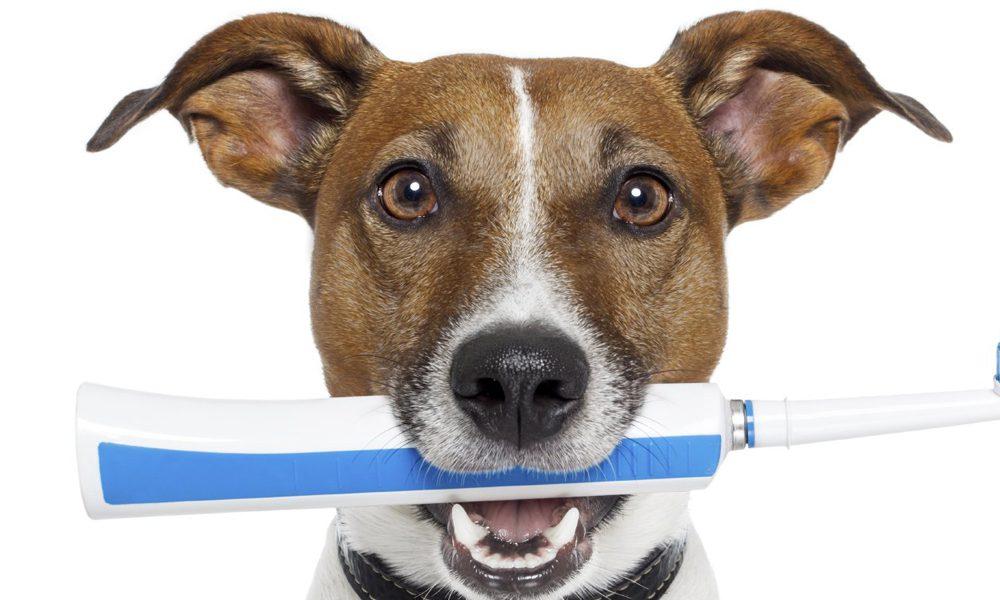 Denti del cane: come mantenerli sani a lungo