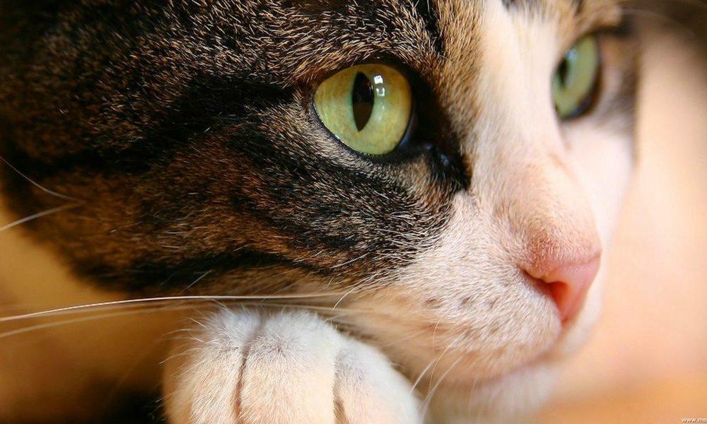 17 febbraio: in tutta Italia si celebra la Festa Nazionale del Gatto