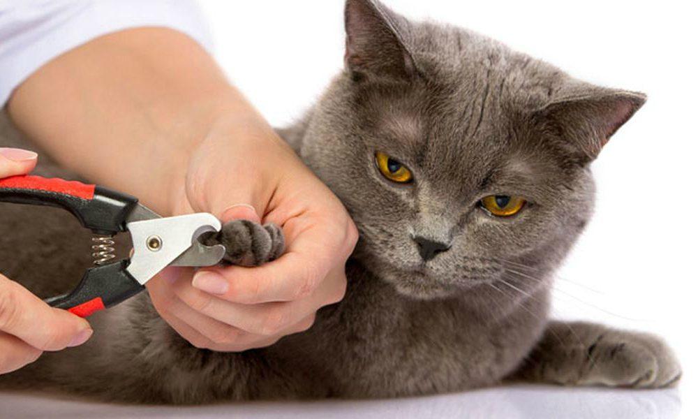 """""""L'Esperto risponde"""": le unghie incarnite nel gatto"""