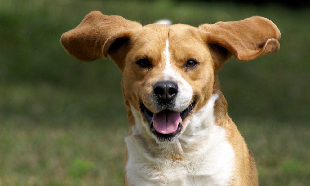 Cani e olio di cocco: 5 (buoni) motivi per usarlo con loro