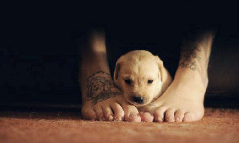 Perché i cani si accucciano ai nostri piedi (e cosa vuol dire)