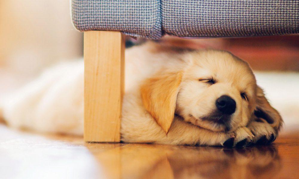 Cani: la posizione in cui dormono la dice lunga sul... loro carattere!