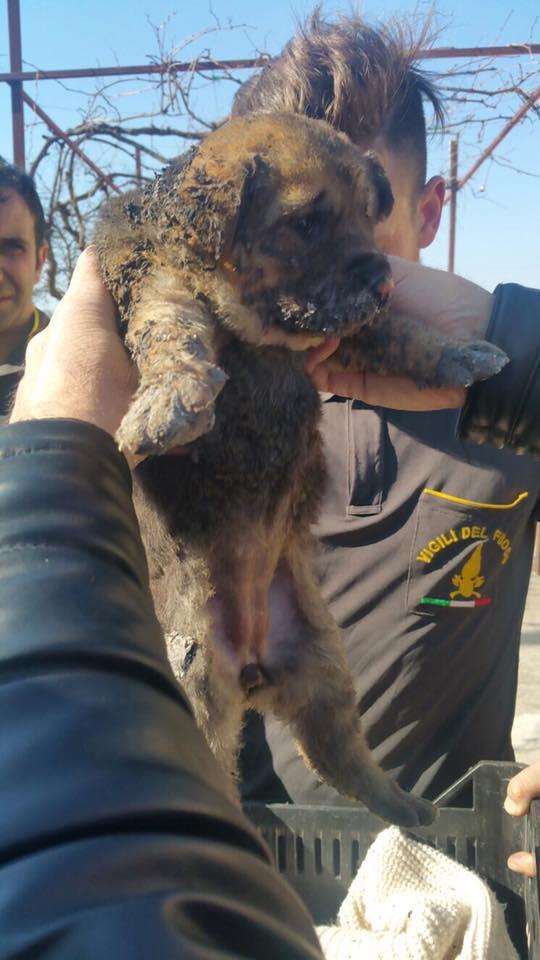 Orrore ad Eboli: cuccioli arsi vivi [IMMAGINI FORTI]
