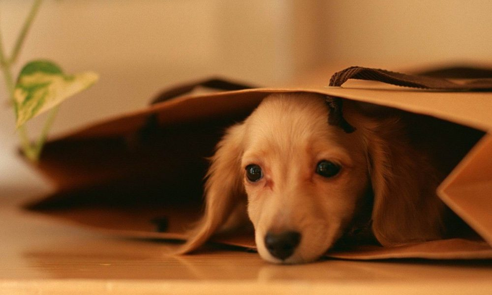 """Cani """"manipolatori"""": se vogliono sanno come ingannarci. Lo studio"""