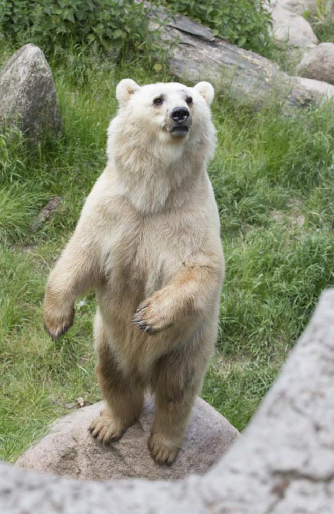 Shock allo zoo: ucciso un orso rarissimo