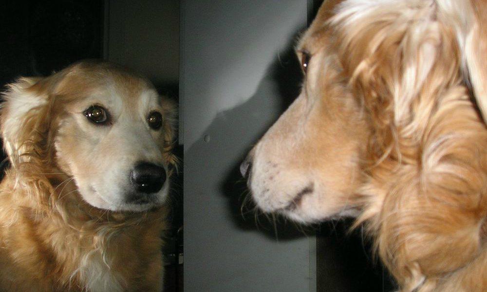 L incredibile reazione di un cane allo specchio video velvet pets velvetpets - Cane allo specchio ...